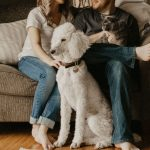 What Happens To The Family Pet During A Divorce In Colorado?